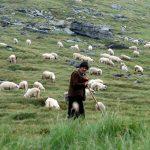 Los Pastores de Estella: Descubre la leyenda