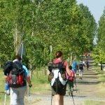 Realizar el camino en 7 días: Camino Francés